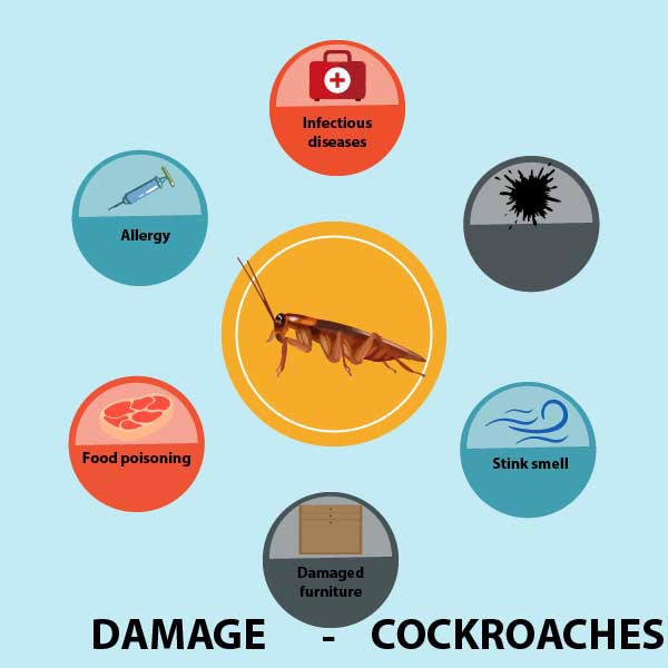 damage cockroaches