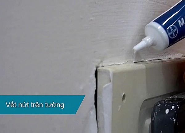 hnpc ant control service
