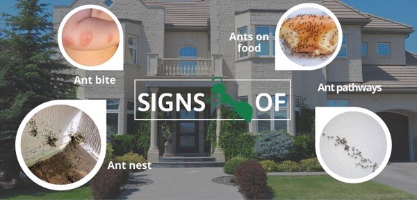 signs of ant