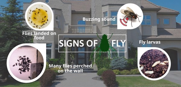 signs of fly