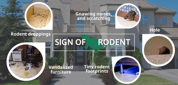 signs of rodent