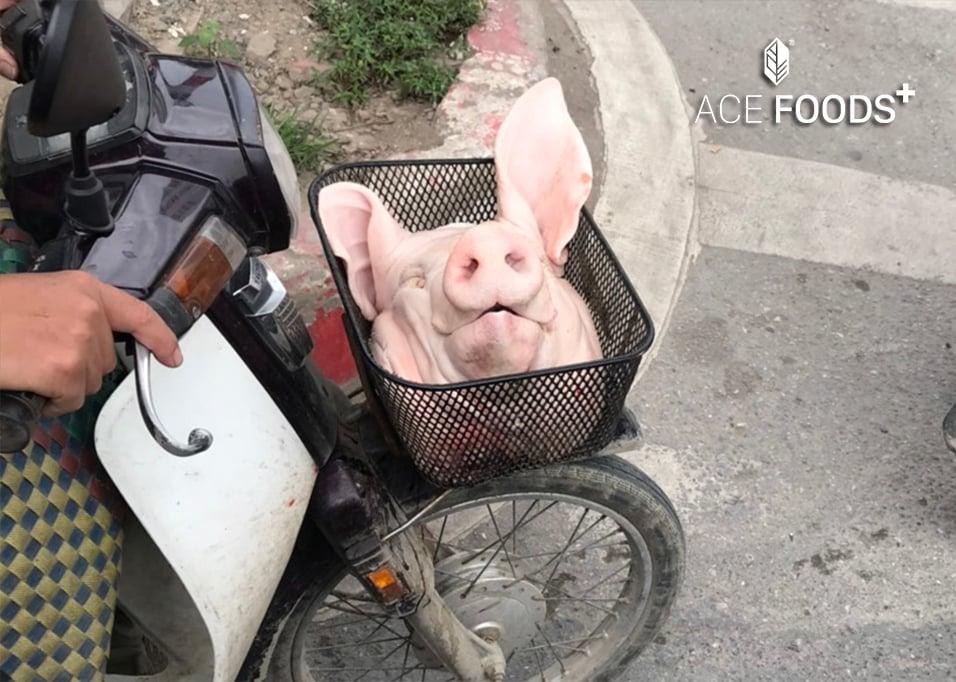 hành trình thịt lợn bẩn