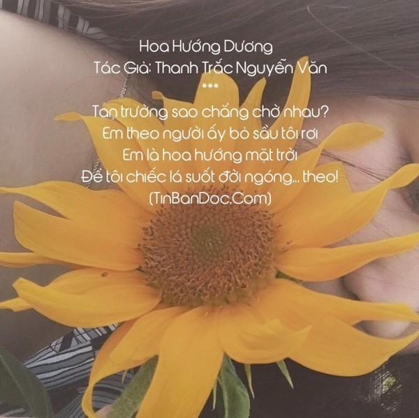 Các bài thơ về hoa hướng dương