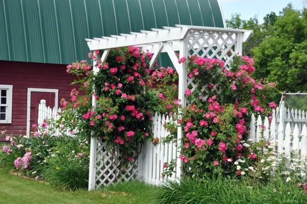 Làm giàn cho hoa hồng leo bằng gỗ, tre