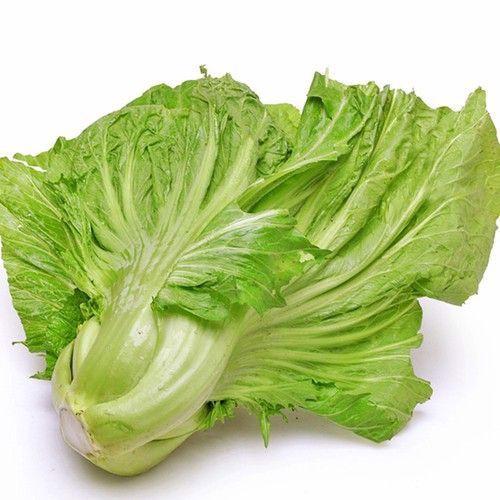 giống rau cải bẹ đông dư