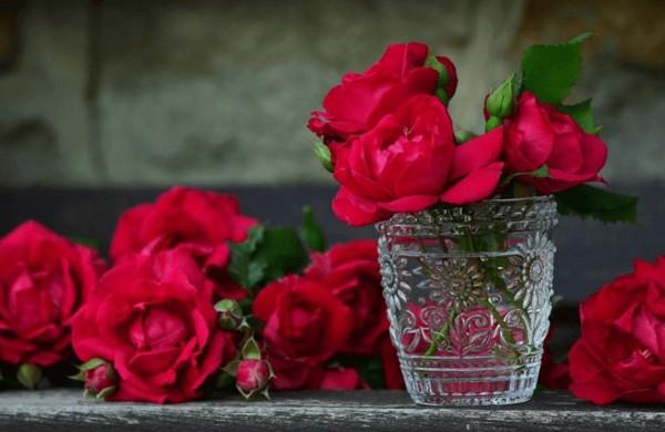 Hoa hồng đỏ tượng trưng cho tình yêu bất diệt