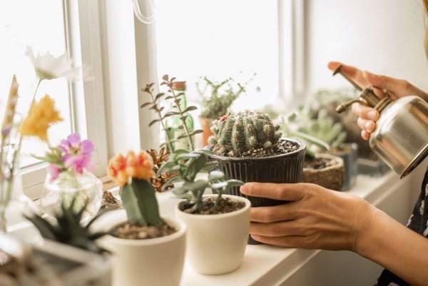 Hoa tự trồng tại nhà