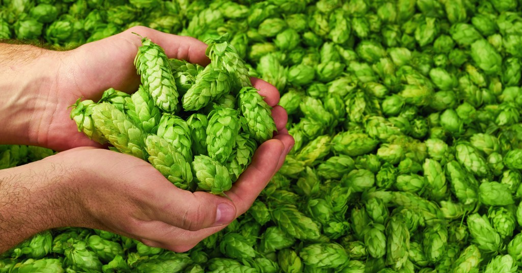 The Untold Story of Hops