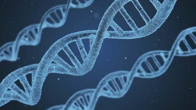 Chuyên đề 1 sinh 12 - Cơ chế di truyền và biến dị cấp phân tử