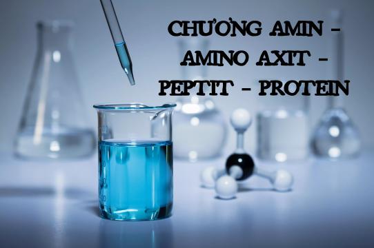 Hệ thống hóa kiến thức chương amin – amino axit – peptit – protein