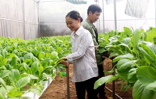 Mô hình trang trại của gia đình ông Nguyễn Thái Phong ở khu Trà Xuyên, phường Khúc Xuyên (thành phố Bắc Ninh)